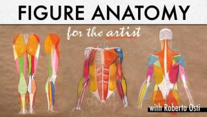 roberto-osti-anatomy-drawing-teacher-bluprint-reviews