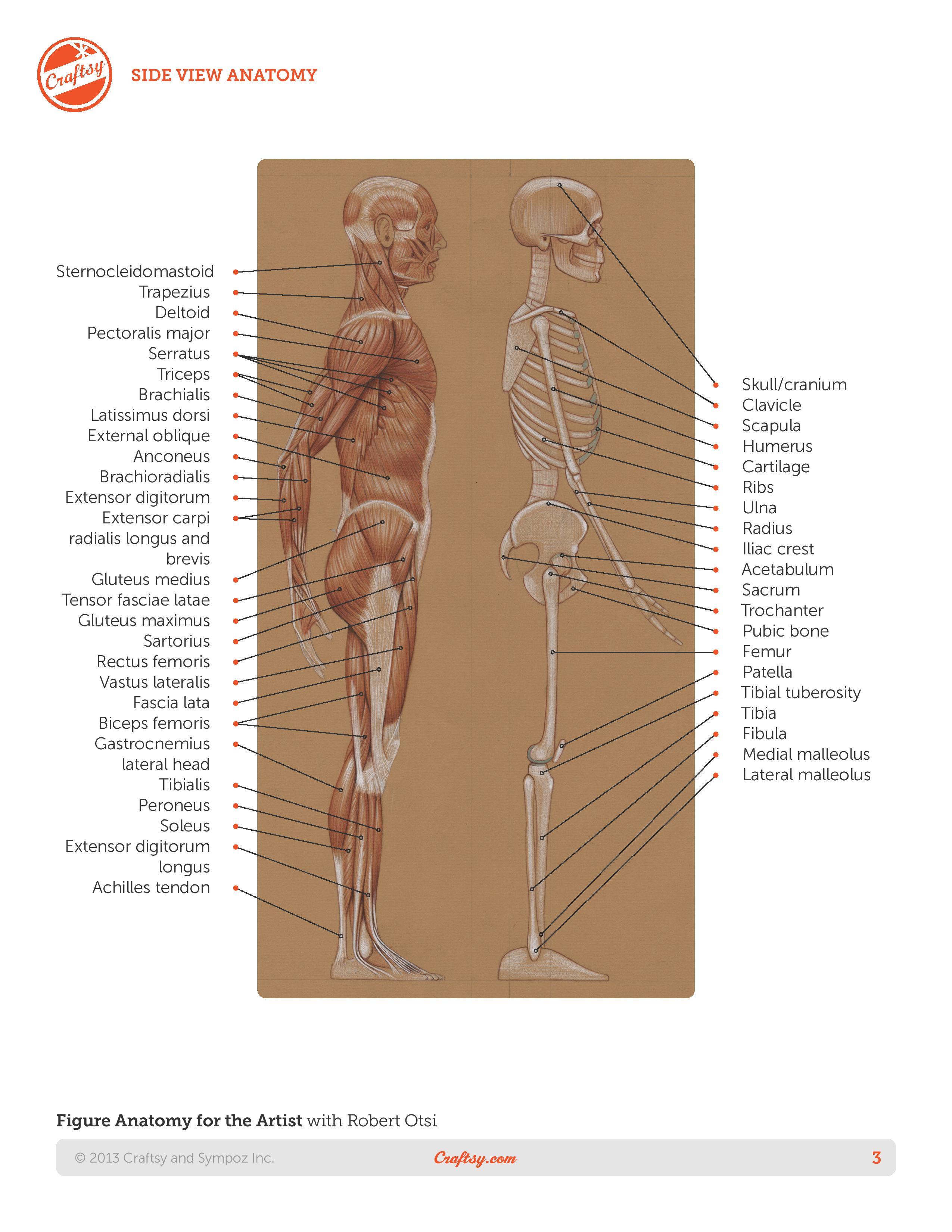 Roberto-Osti-book-Basic-human-anatomy-page-3