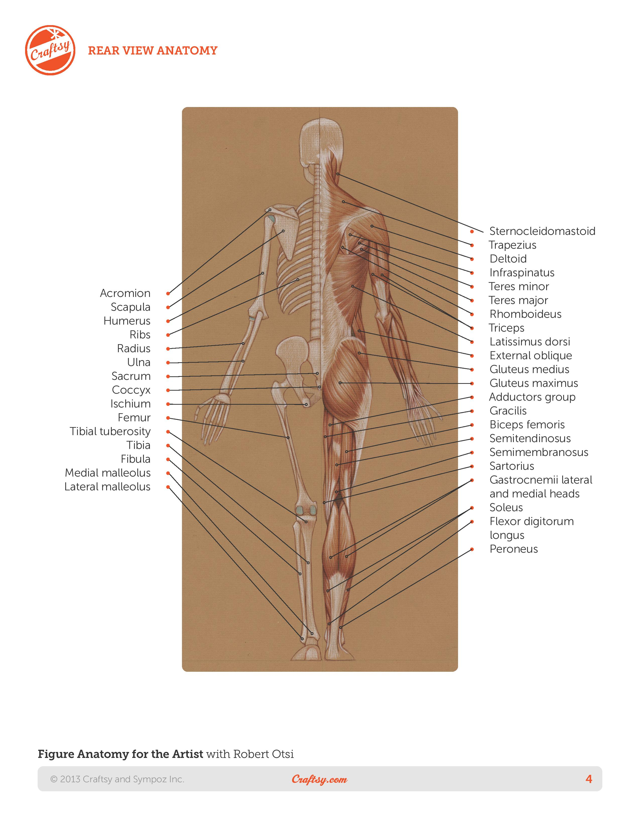 Roberto-Osti-book-Basic-human-anatomy-page-4
