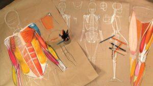 roberto-osti-anatomy-drawing-teacher-bluprint-online-lessons