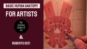 Basic Human Anatomy for Artists @ the Teaching Studios of Art®