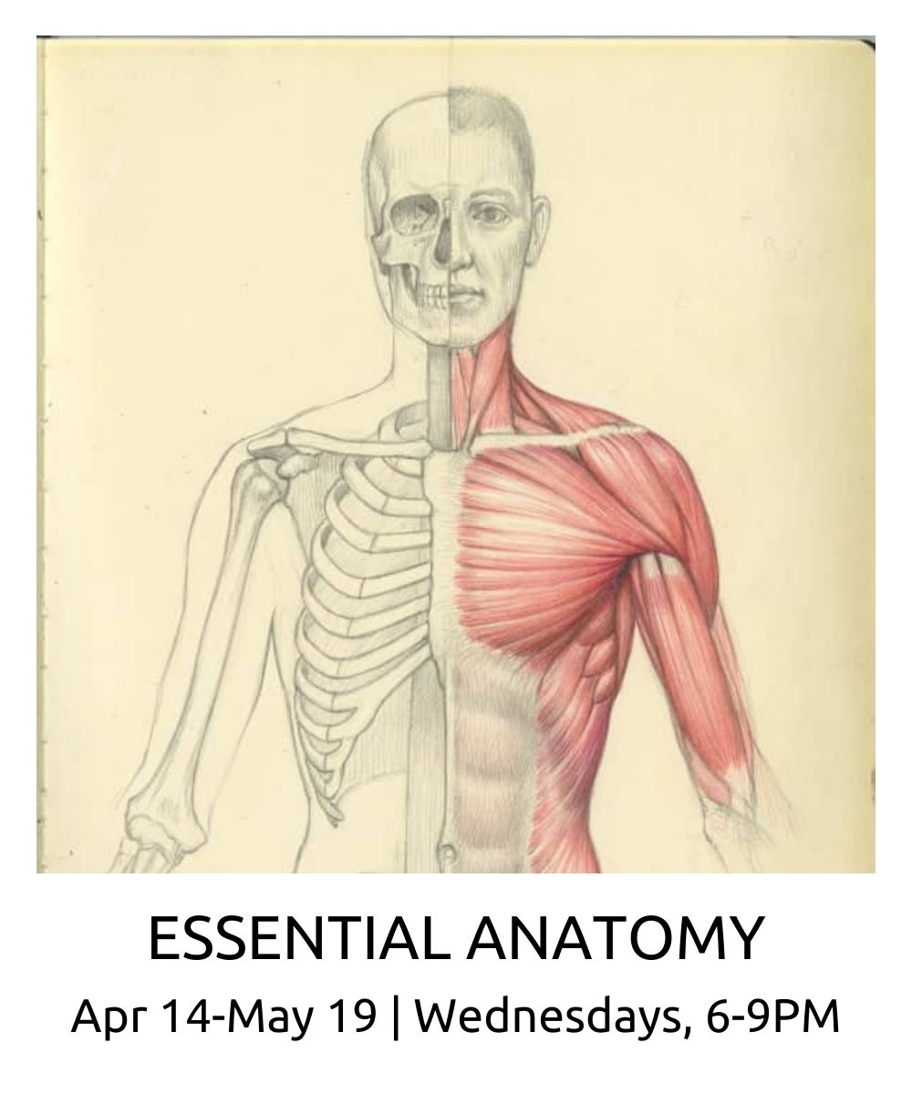 Essential Anatomy spring 2021 roberto osti new renaissance atelier APR 14 MAY 19