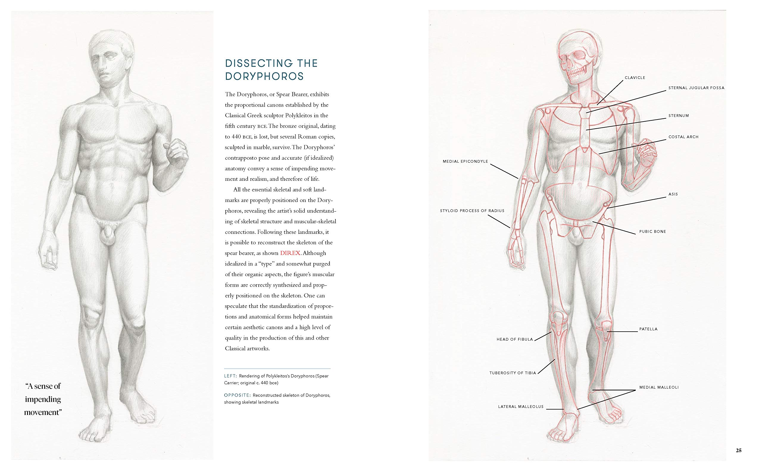 roberto-osti-drawing-book-dynamic-human-anatomy-2