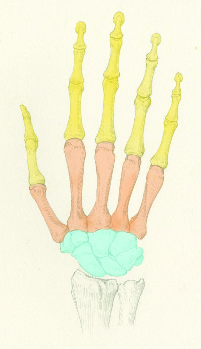 roberto-osti-drawing-hand-1